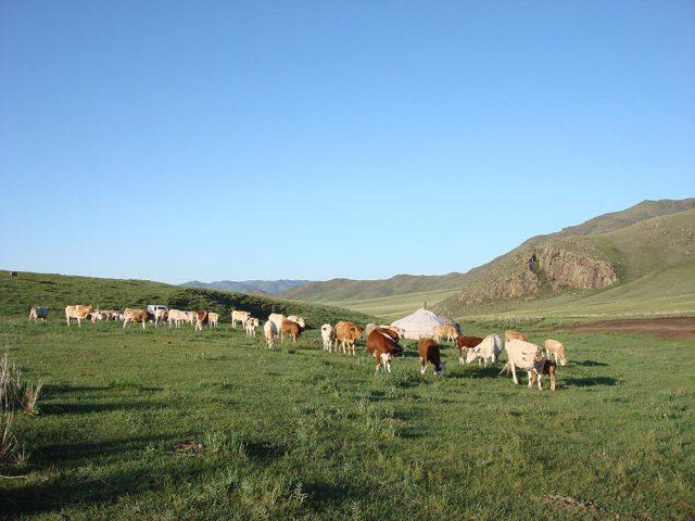 広大な草原で移動式住居「ゲル」に暮らす遊牧民と馬の美しい姿…。モンゴルと聞くとそのようなシーンを思い浮かべる方も多いのではないでしょうか? また、ハッコラ編集部としては、モンゴルの伝統的な牧畜業による豊かな乳製品とそれらの発酵食品にも思いを馳せてしまいます。