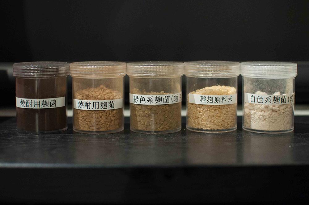 様々な麹菌について