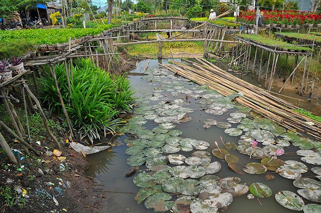 ドンタップムオイ、ドンタップ省(Dong Thap Muoi, Dong Thap province):ベトナムの熟鮓「マム・カー」がおいしい地域