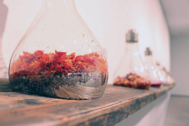 発酵,発酵食,甘い記憶/食べる/続けて残ったもの,南風食堂,フードスケープ〜私たちは食べたものでできている(アーツ前橋):発酵ライフを楽しむ haccola(ハッコラ)