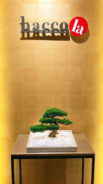 東京都新宿区の米ぬか酵素風呂(酵素浴)「発酵風呂haccola(ハッコラ)神楽坂本店」