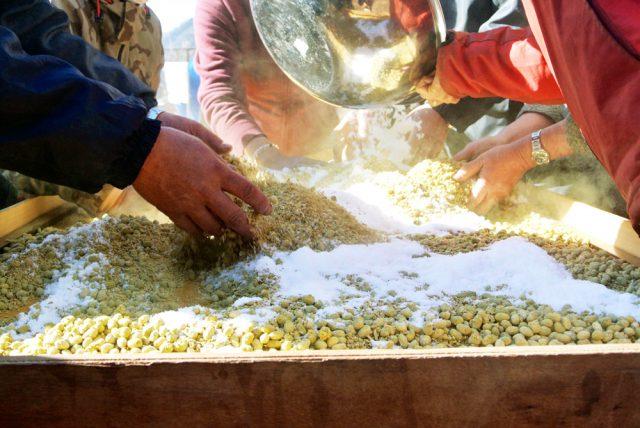 完成した麹を「出麹(でこうじ)」したあと手早くほぐし、塩を混ぜ合わせたら樽へ移動。井戸水を足して「もろみ」へと進化させます。