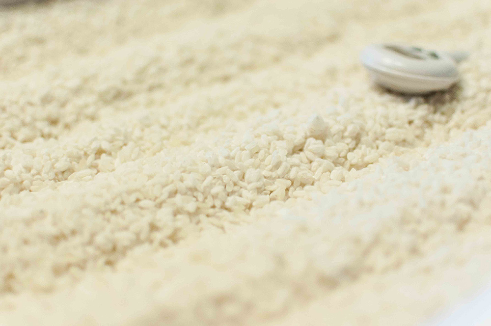 麹づくりの最終章「出麹」のタイミングの見計らい方を学ぶ