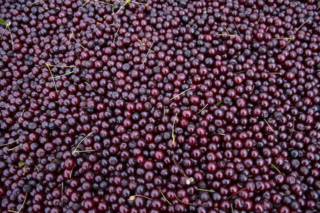 The winery that changed the way people view cherry wine