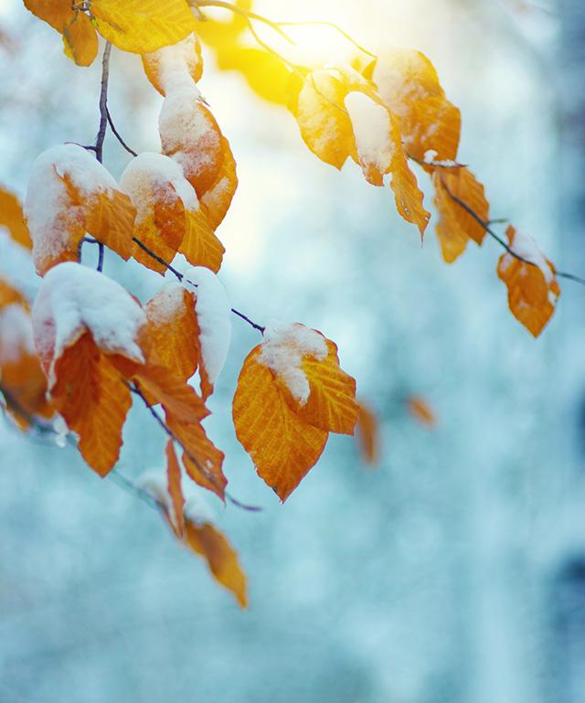 霜降の秋の葉