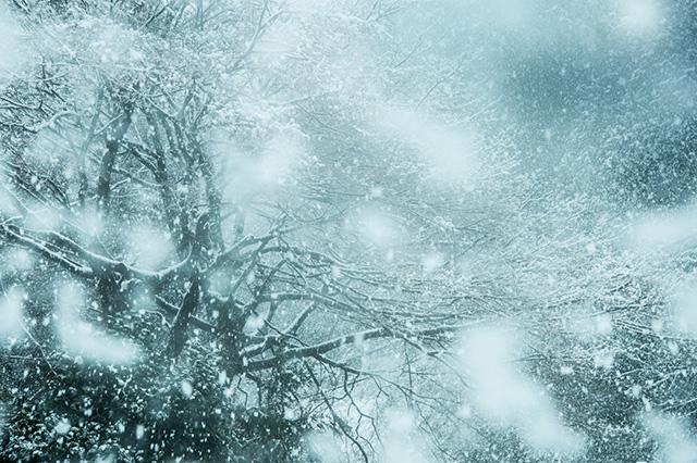 大寒の大雪