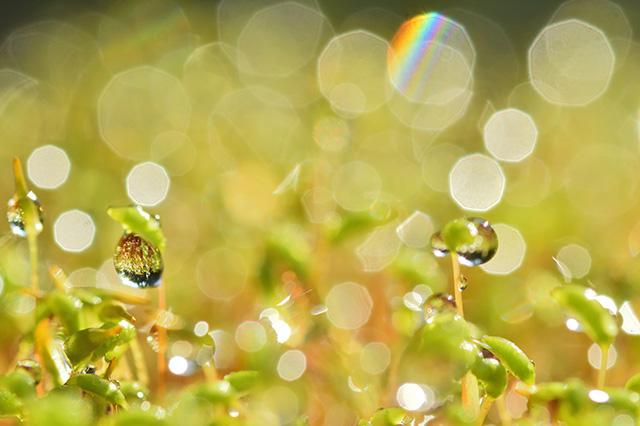 雨水に輝く水滴