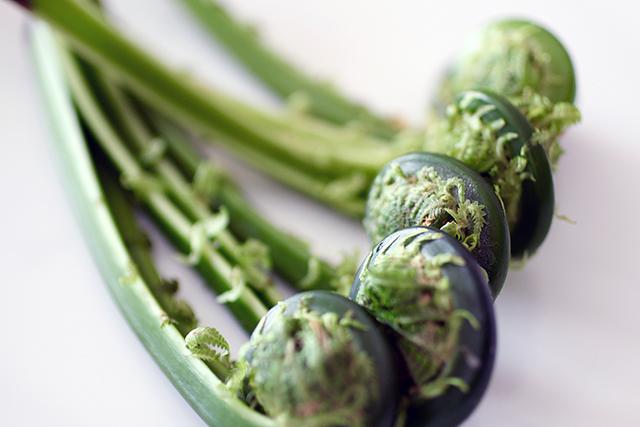 春の山菜、こごみ