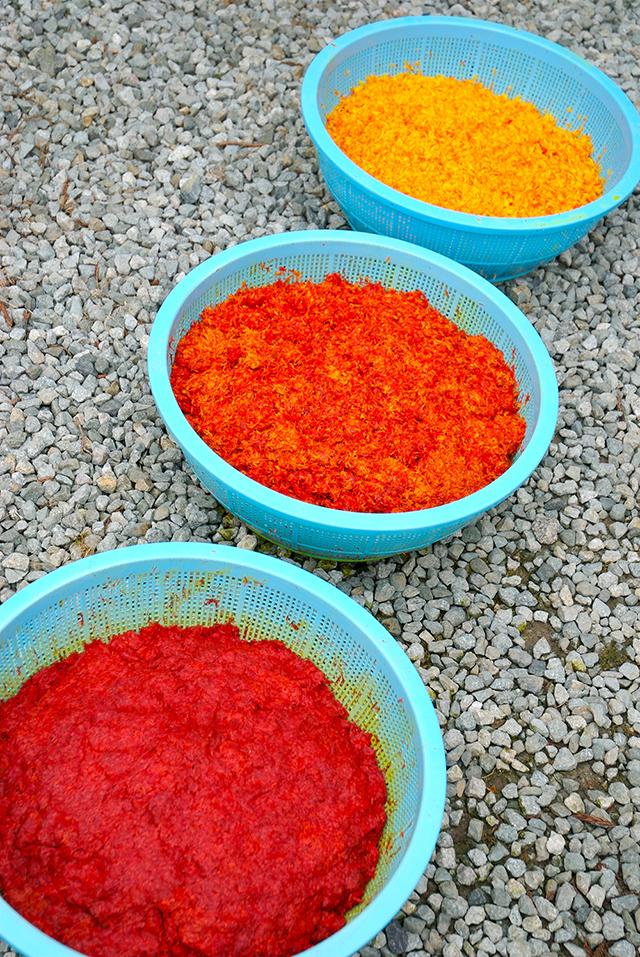 手でよく揉みながら黄色い色素を洗い流し、日陰で朝・昼・晩と水を打ちながら発酵させる。