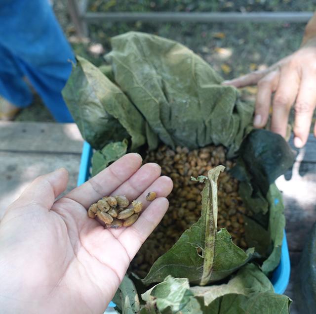 タイの納豆「トナオ」を食べにチェンマイへ