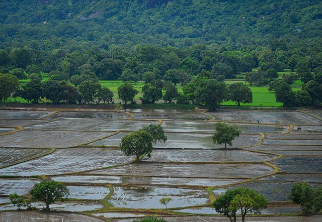 アンザン省「チャウ・ドク(Chau Doc)」:ベトナムの熟鮓「マム・カー」がおいしい地域