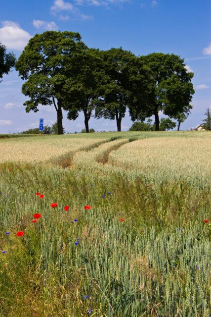 feldblumen - field flowers