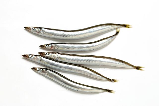"""日本三大魚醤のひとつ、香川県の「いかなごしょうゆ」には、""""ふるせ""""と呼ばれる成長したいかなごが使われる"""