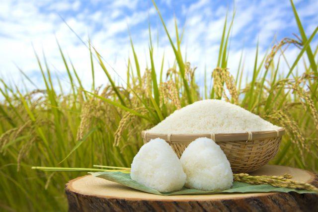 大陸の乾燥した大地には麦が最も適した栽培作物であるのに対して、山河が入り組み温暖湿潤な日本には稲が最も適した栽培作物だった。それぞれの風土によって、主要栽培作物が確立します。 そして、以来お米が日本や日本人に与えた影響は多方面に渡り、切っても切り離せない大切なものとなりました