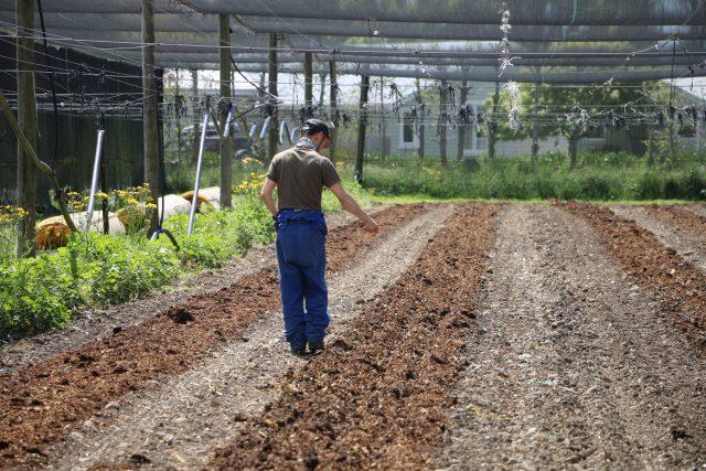 オーガニックで大豆栽培