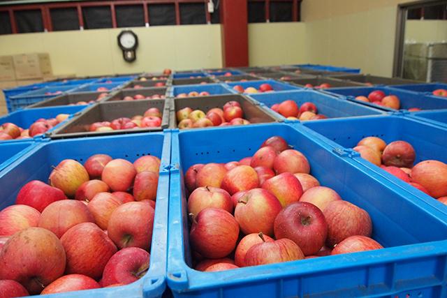 「ワイナリーこのはな」では、鹿角産リンゴを使った『かづのシードル』も発売