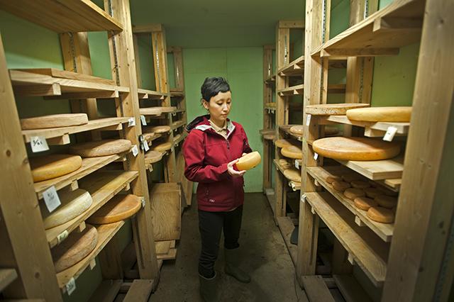 チーズ作りに欠かせない発酵過程や、種類・特徴を学べるプログラム
