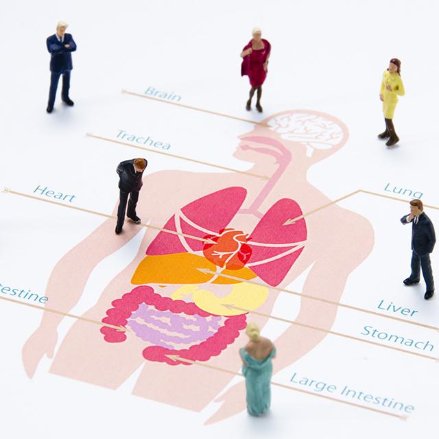 意思でコントロールできる内臓は腸だけ!正しい腸活で最強の自分に