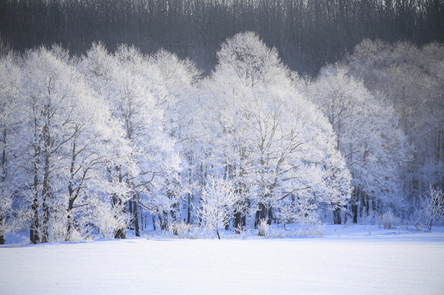 大雪(たいせつ)とは
