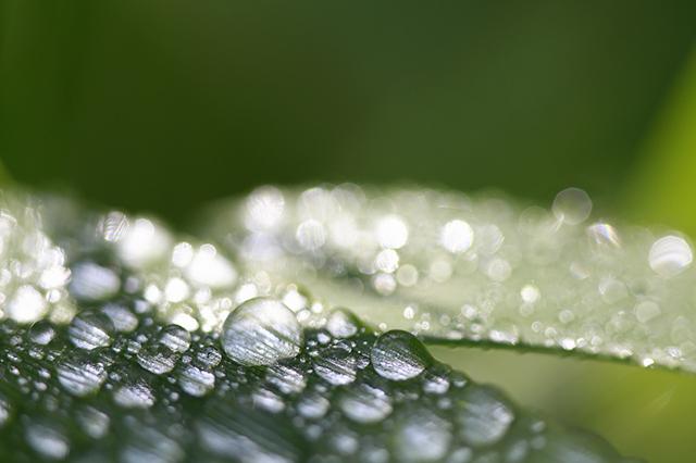 雨水(うすい)とは