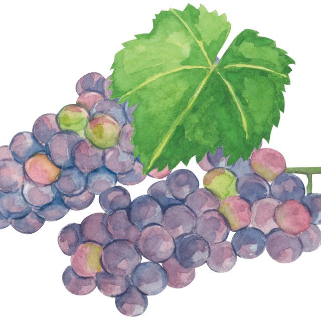 甲州ワイン_発酵食品サミットinやまなし:haccola 発酵ライフを楽しむ「ハッコラ」