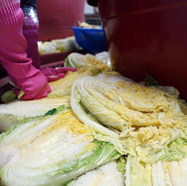 その後、何度も白菜の漬かり具合をチェックするアジュンマ
