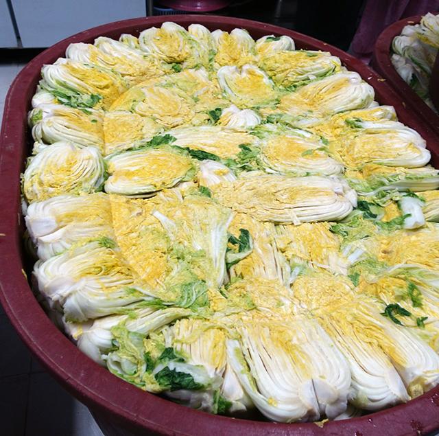 しっかりと漬かっている白菜