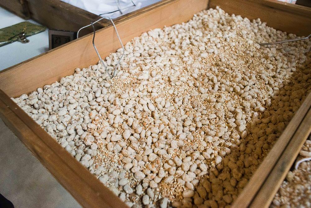 菌糸がまわってきた麹