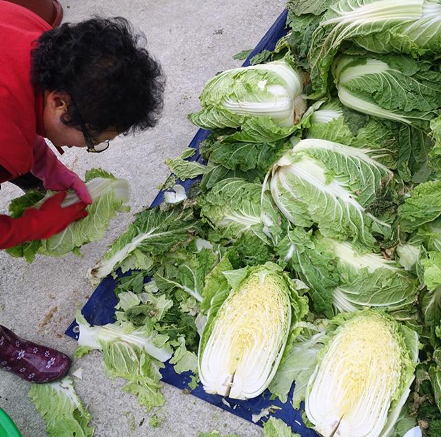 白菜の切り方にも各家の個性が出る:白菜を切る(割く)