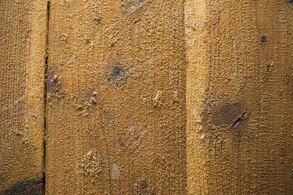 その言葉通り、壁にも天井にもびっしりと菌糸がはびこっていました