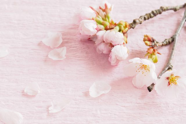 春分の日の発酵レシピ