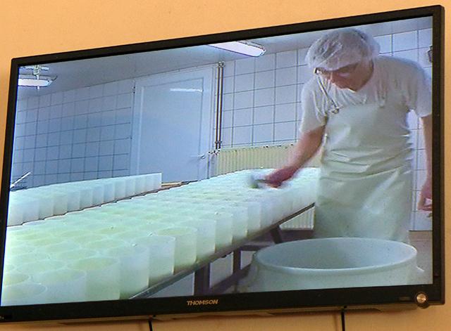 凝乳した牛乳を手作業で入れる